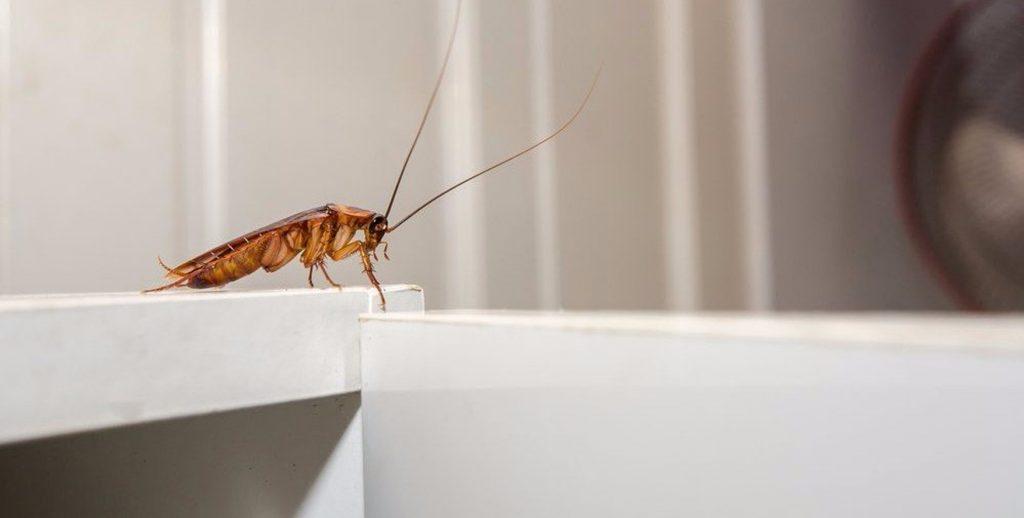 Proper Pest Control